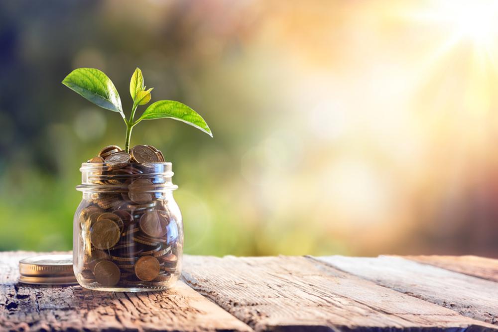 Pflanzeneinkauf - Finanzielles