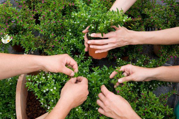 Pflanzenschule Baustein 8